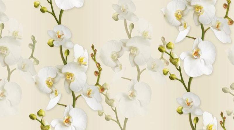 Các bước làm hoa lan từ giấy mỹ thuật
