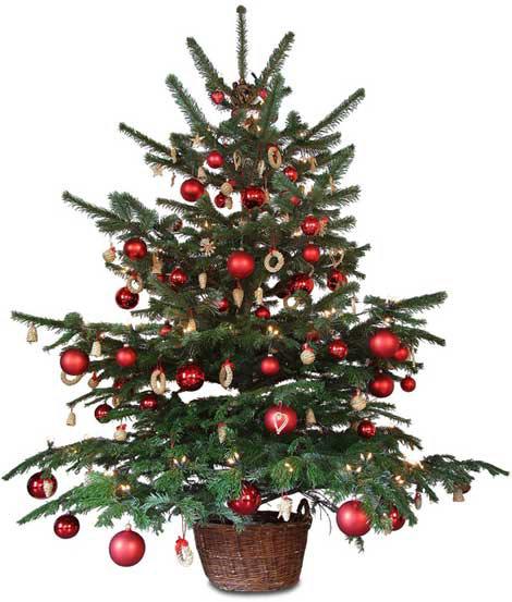 Trang trí cây thông Noel theo phong cách cổ điển