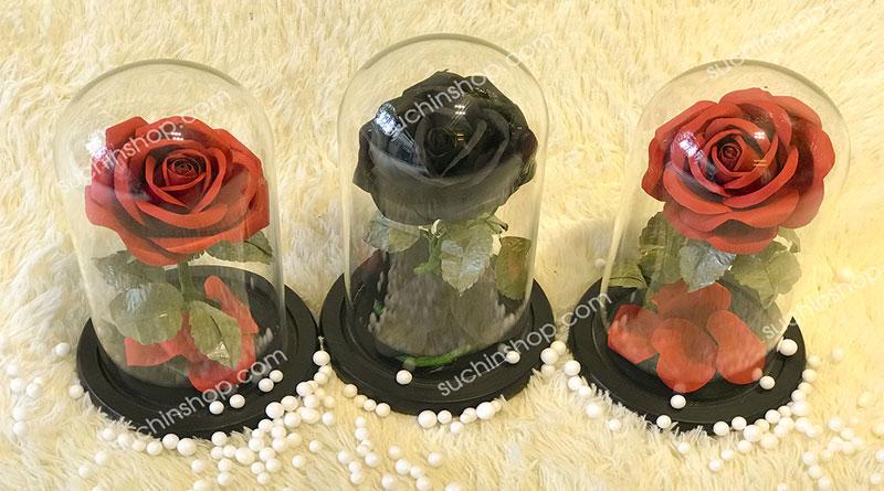 Hoa hồng bất tử HBT01- Beauty and the Beast