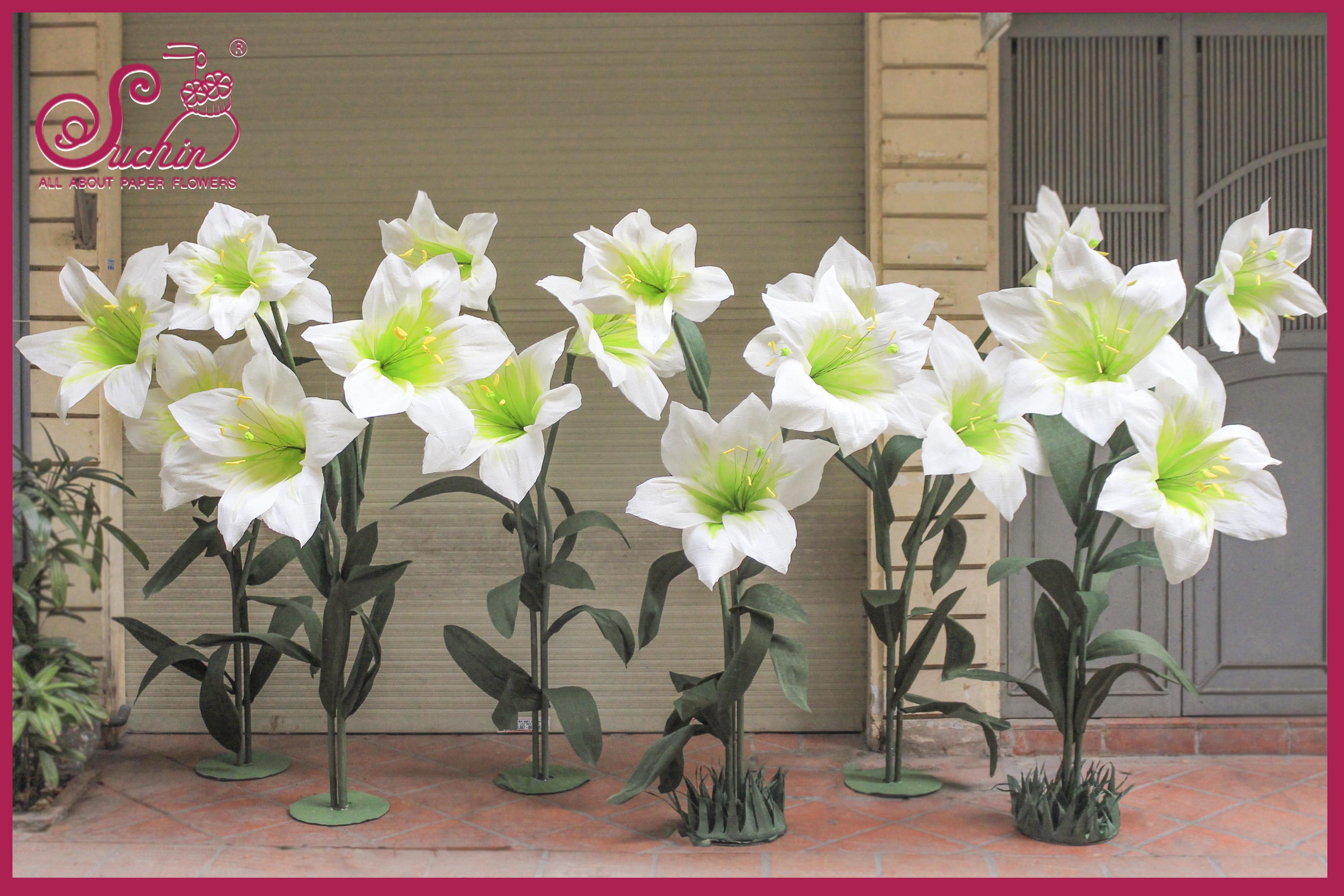 Cây hoa Ly khổng lồ trang trí sự kiện