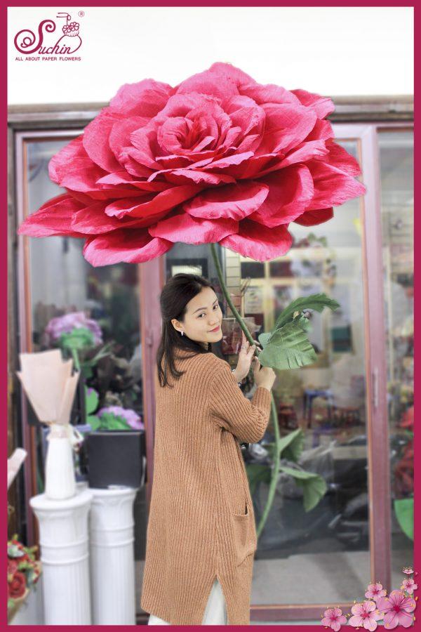 Cây hoa giấy nhún khổng lồ