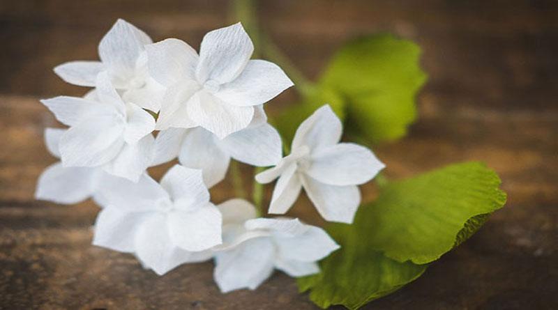 Dạy làm hoa nhài bằng giấy mỹ thuật
