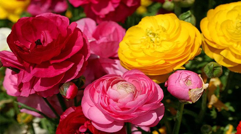 Mách bạn cách làm hoa giấy ngày tết