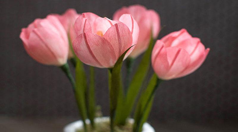 Tip hướng dẫn làm hoa giấy trang trí cực yêu