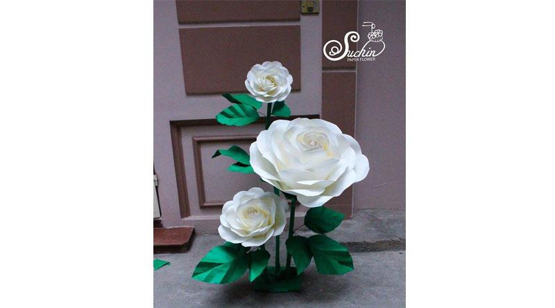 Mua giấy làm hoa hồng backdrop