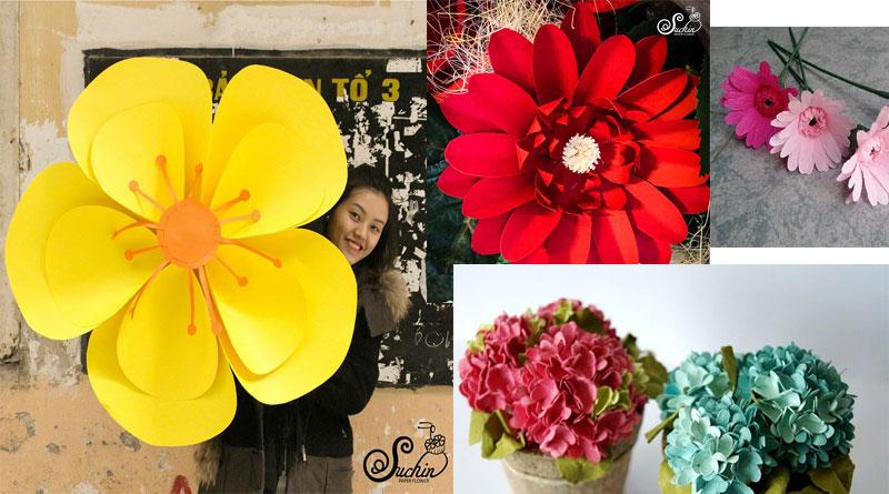 May mắn với hoa giấy và phong thủy cho tuổi của bạn