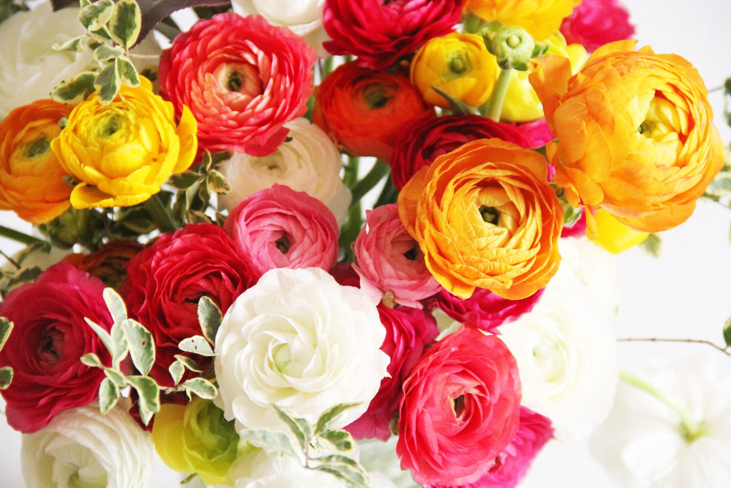 Hướng dẫn làm hoa mao lương bằng 2 loại giấy, mỹ thuật và nhún